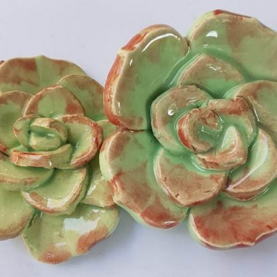 Succulents C