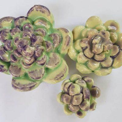 Succulents E