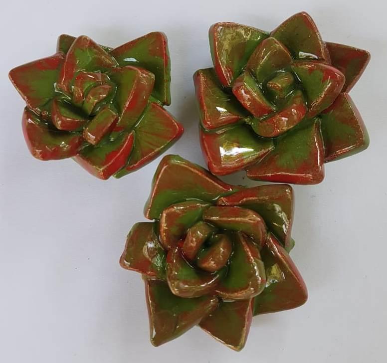 Succulents F