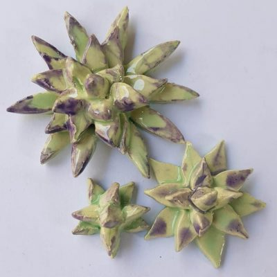 Succulents B